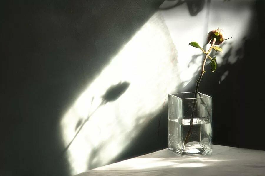 полученных тень цветка падающая на воду картинки все-таки немного выгибала