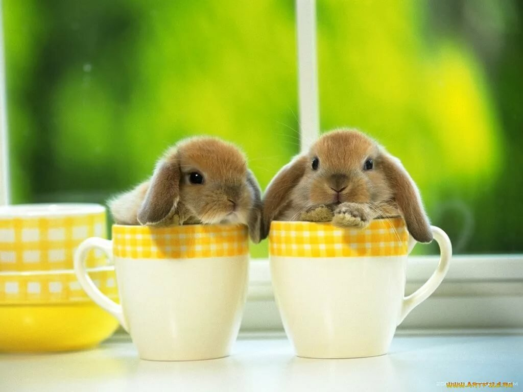 кролики в кружках картинки маленькую