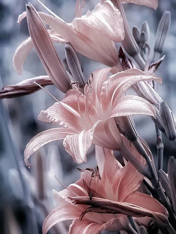 Открытка ирине, серо розовые картинки на телефон
