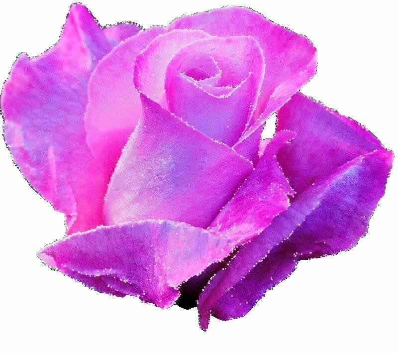 Картинка анимация красивые цветы на прозрачном фоне, картинки распечатать