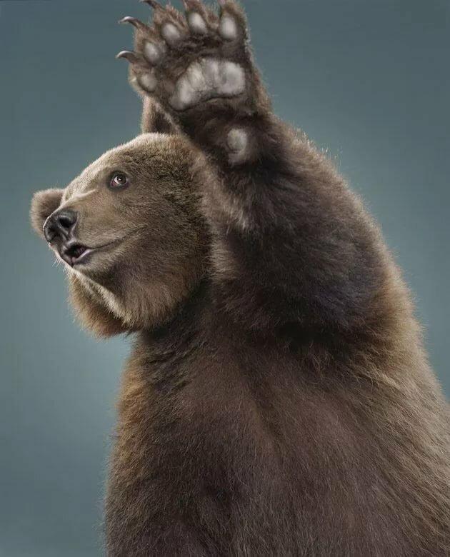 Прикольные картинка медвежат