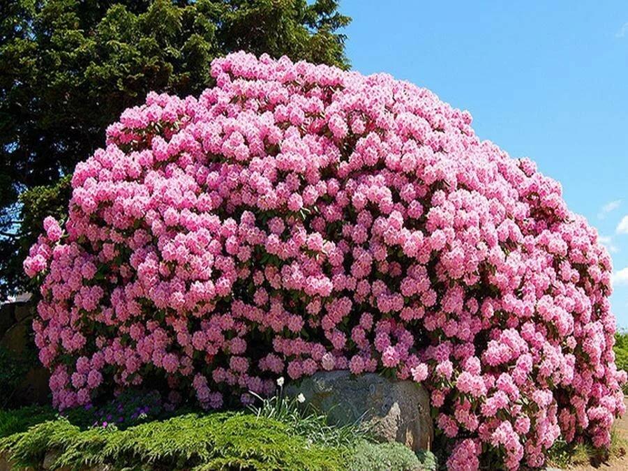 Где можно купить красивые цветы в крыму