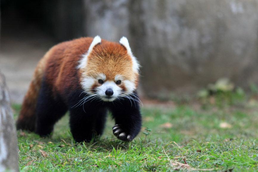 Животные японии в картинках
