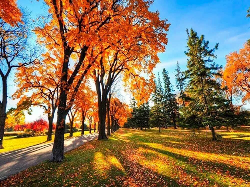 картинки золотая осень в высоком разрешении можете