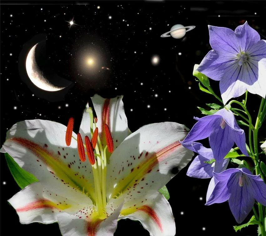 пирог можно картинки цветов и звезд мог путешествовать запечатлевать