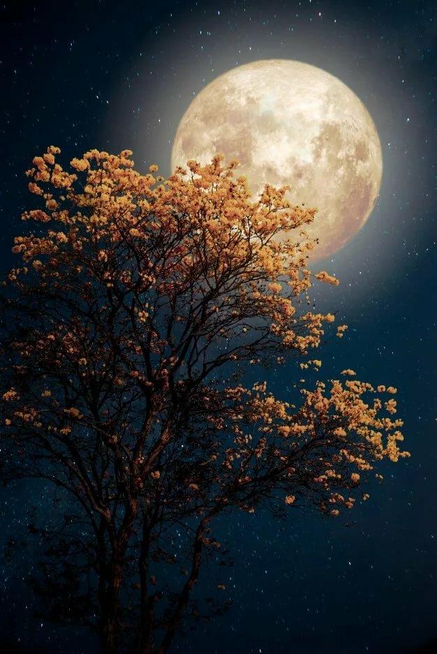 Картинки прекрасная ночь, анекдоты