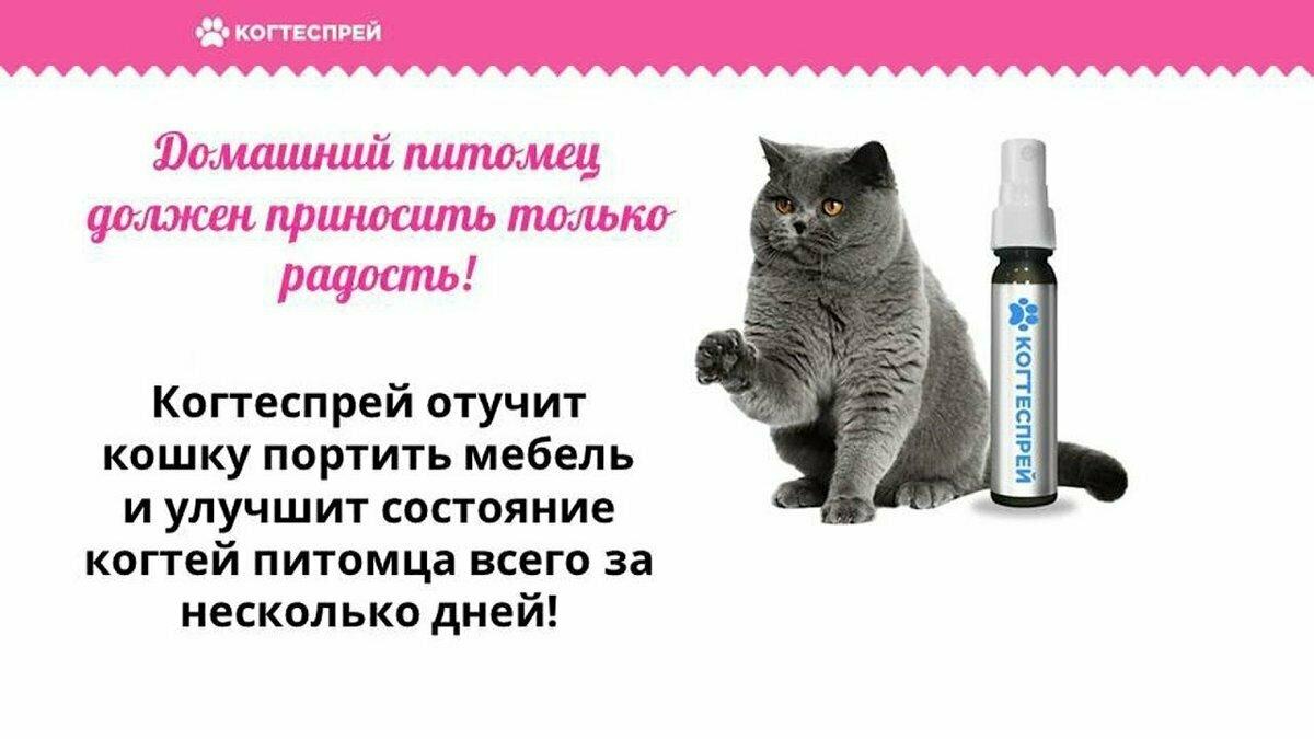 Когтеспрей - уникальный спрей для кошек в Новоузенске