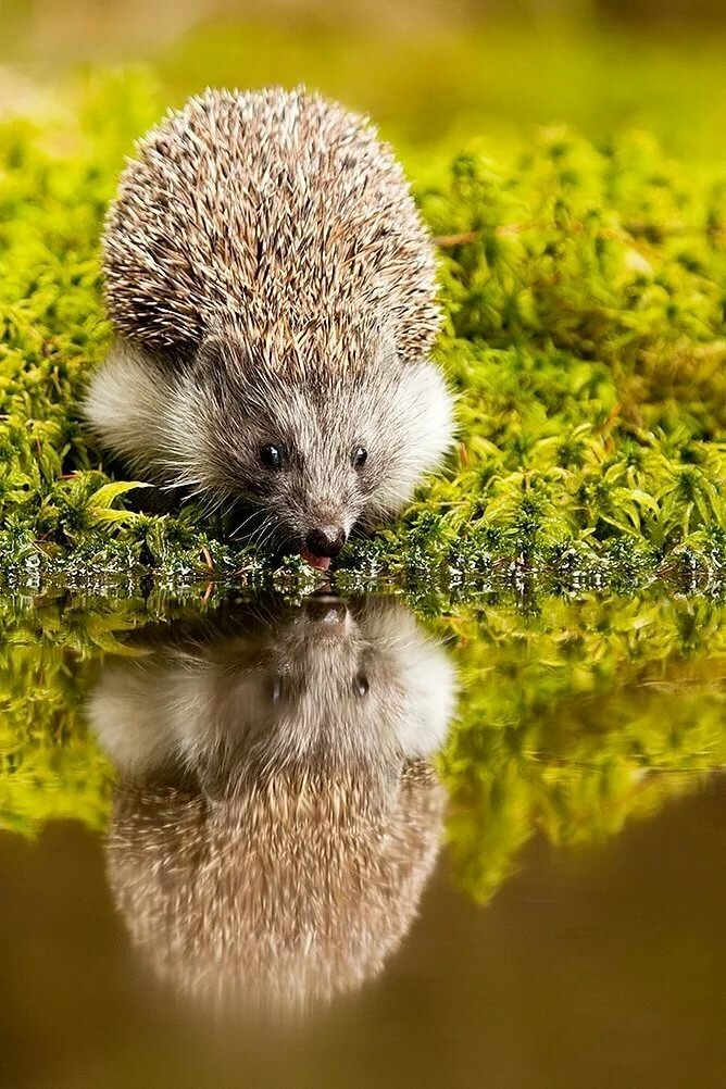 ежик отражение в воде стихи фото любит