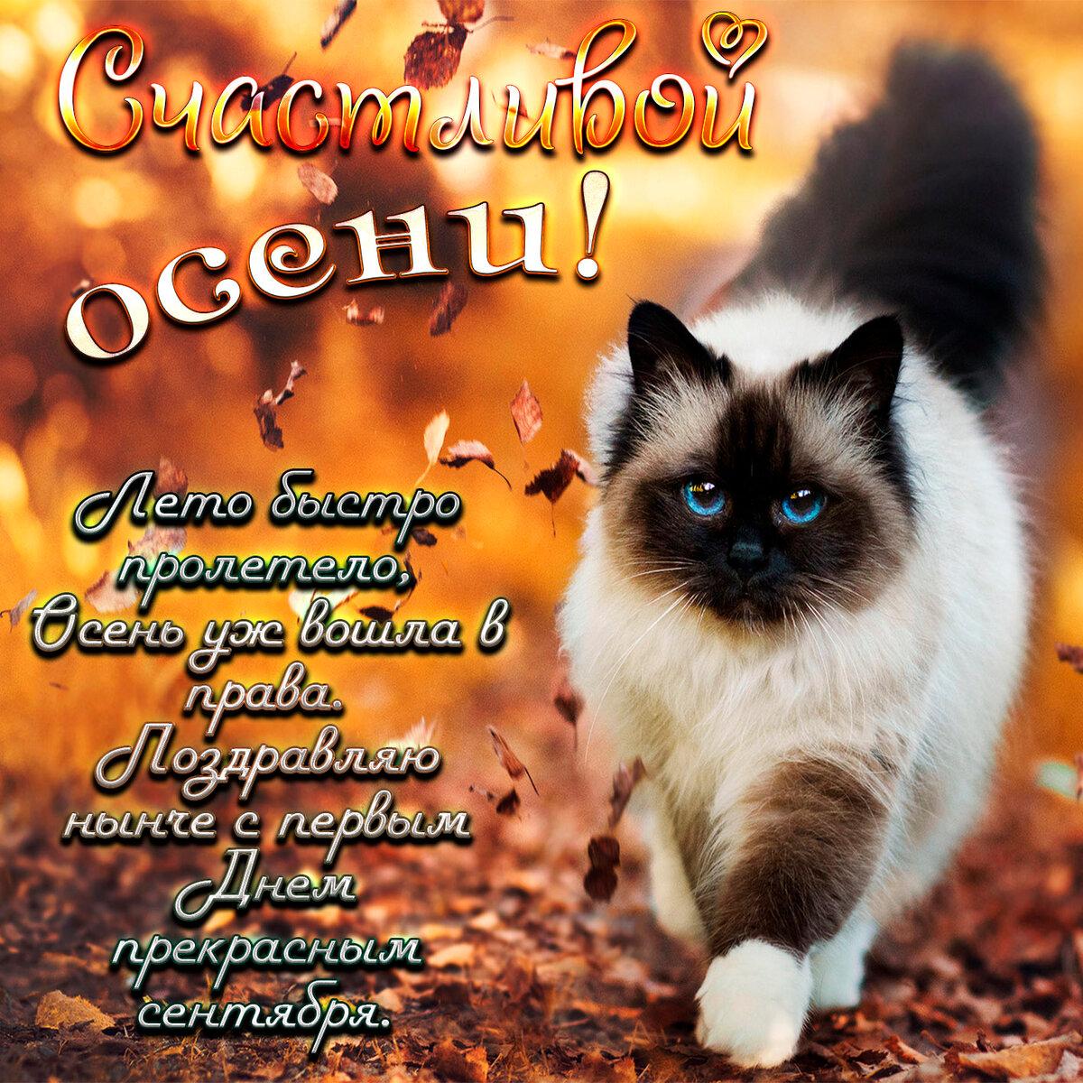 Красивые, поздравления с осенью в открытках