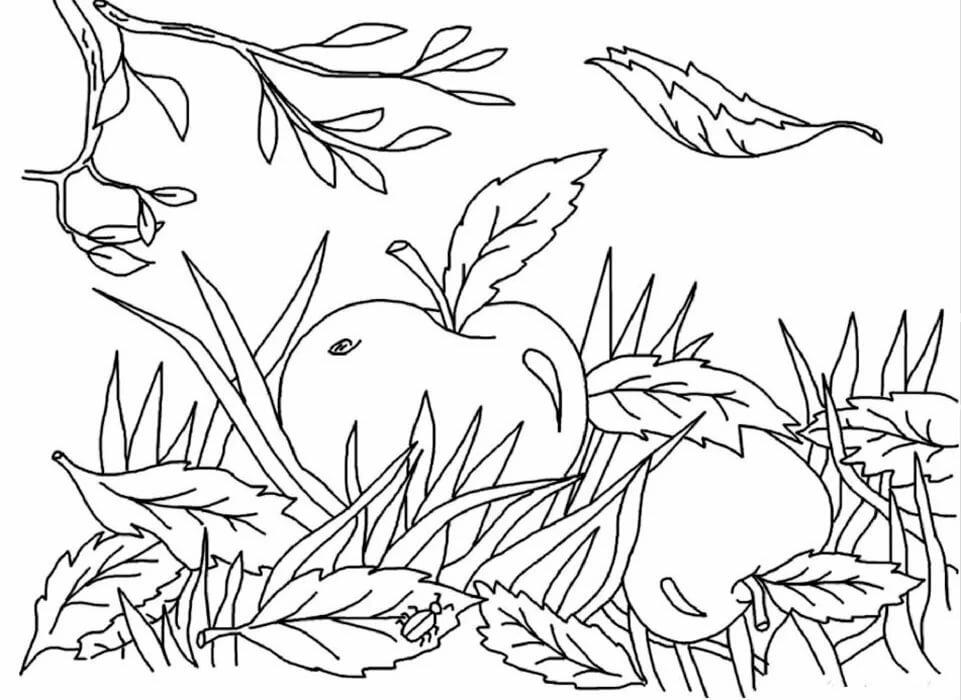 Осень в картинках для детей раскраска