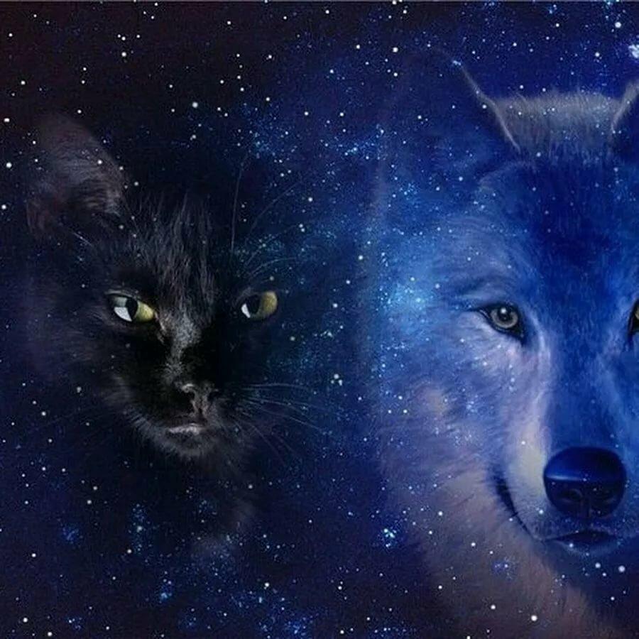 Кот и волк картинка