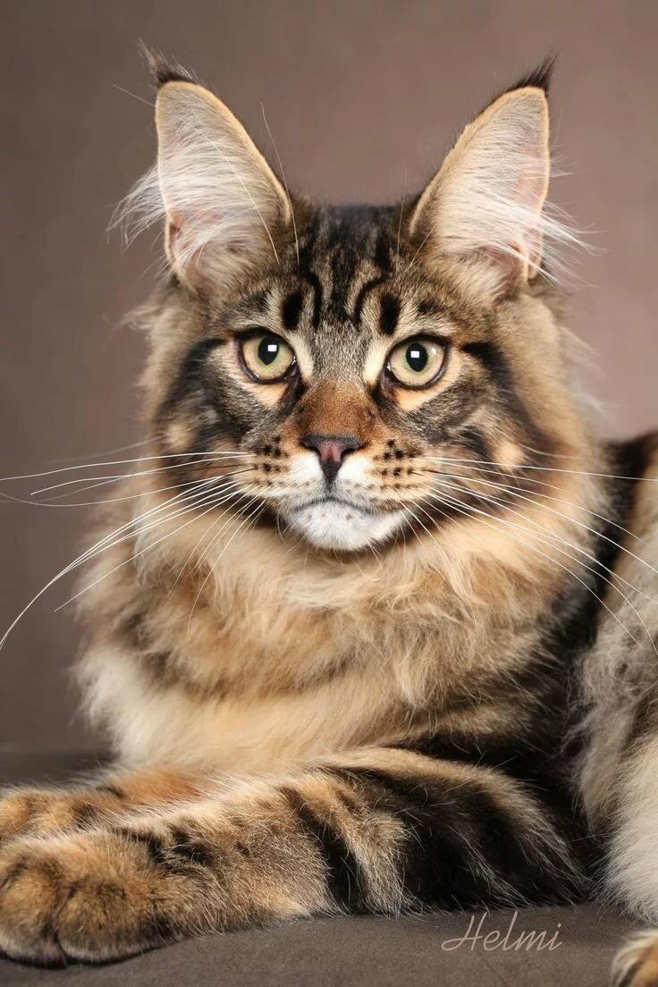 Все породы котов картинки