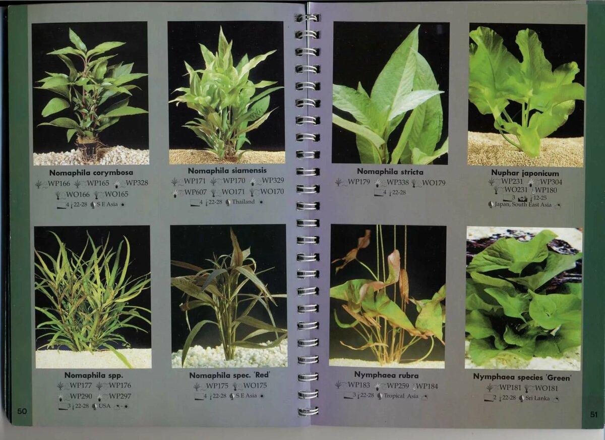 сожалению, виды аквариумных растений с фото и названиями хотите купить полку