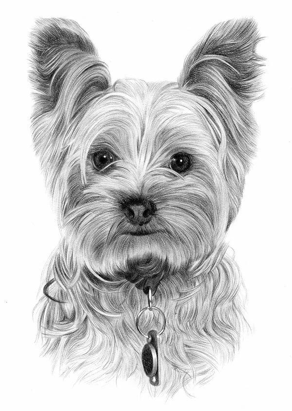 Картинки йорка щенка для срисовки, цветы