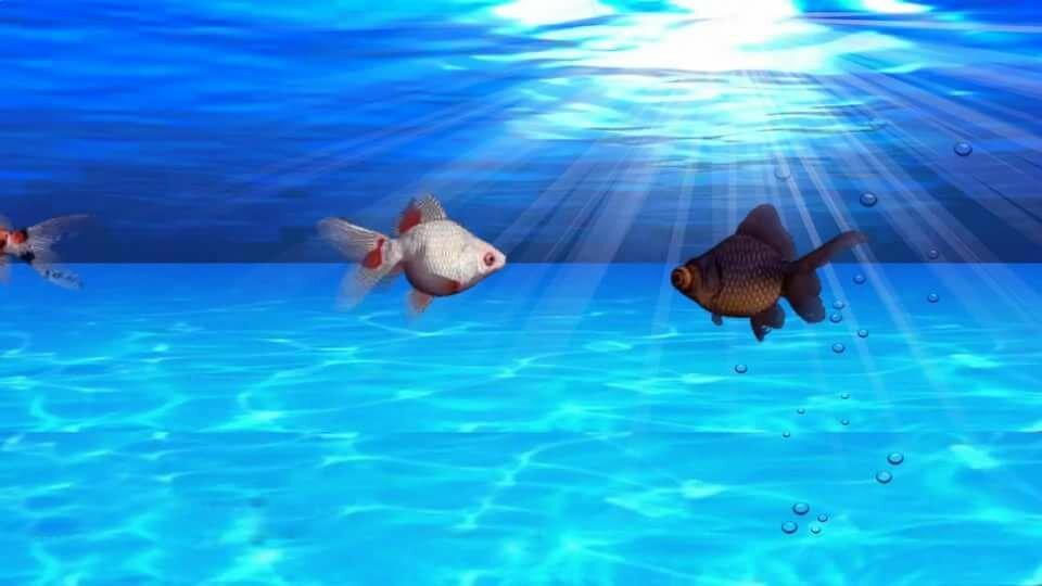 Обои и картинки на рабочий стол с рыбками движущиеся
