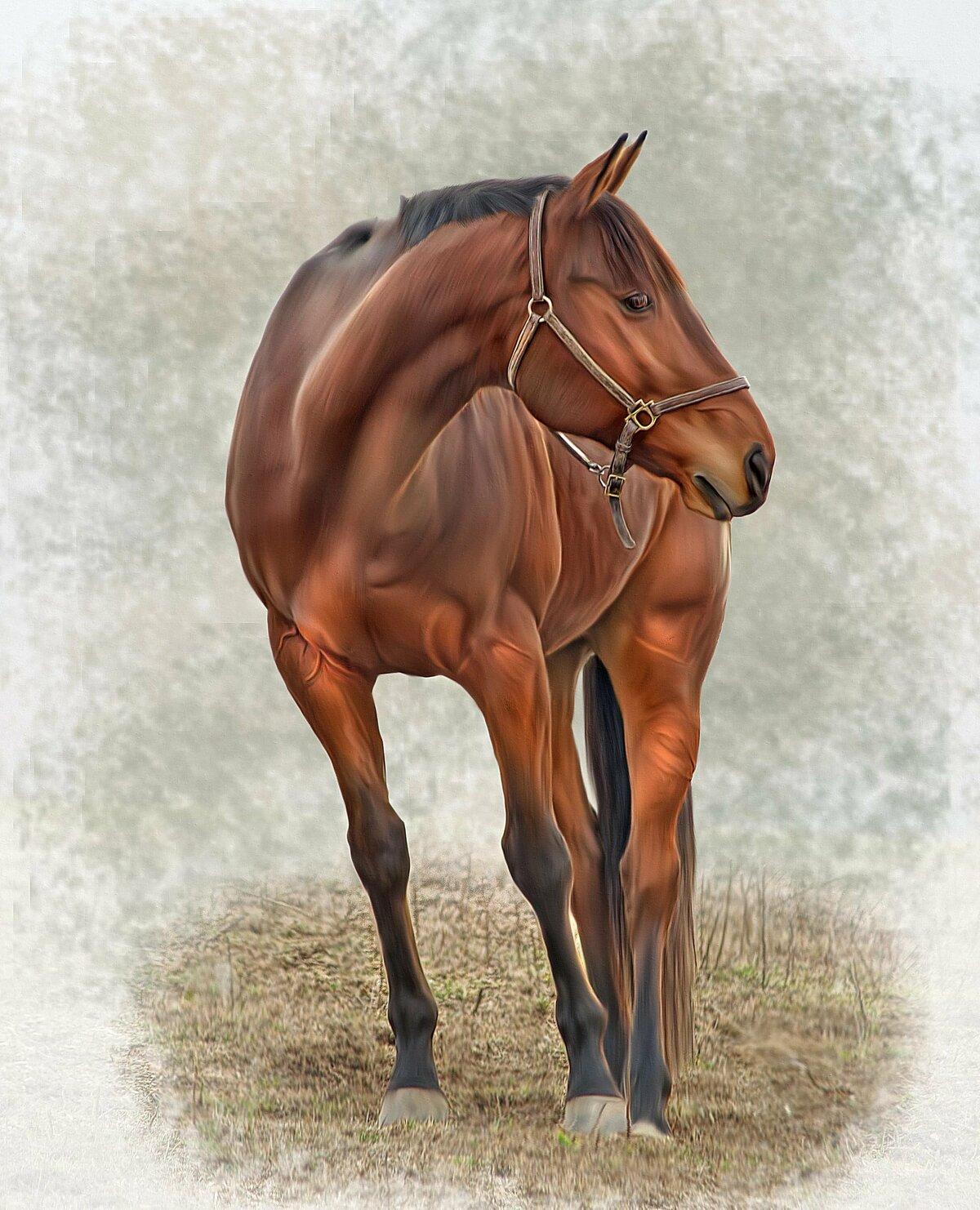 вставки лошадь на весь рост картинки счастливы, здоровы