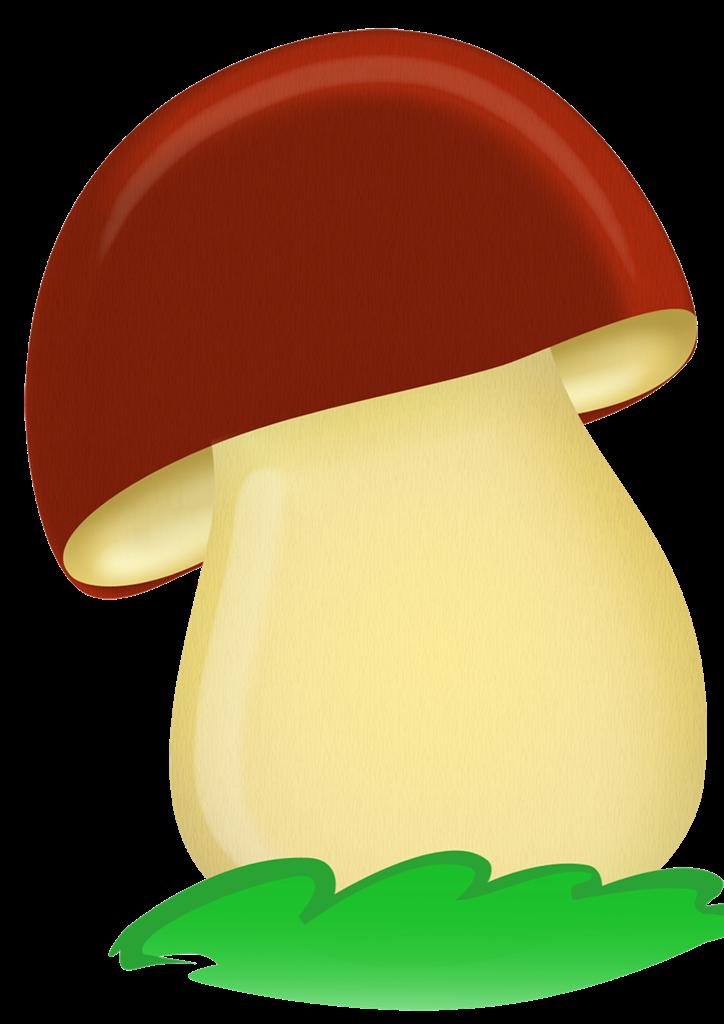 Цветная картинка грибы