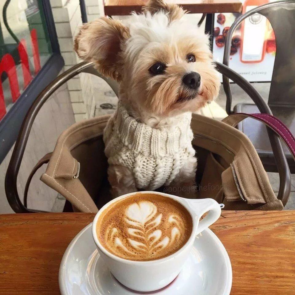 Картинки доброе утро с прикольными собаками