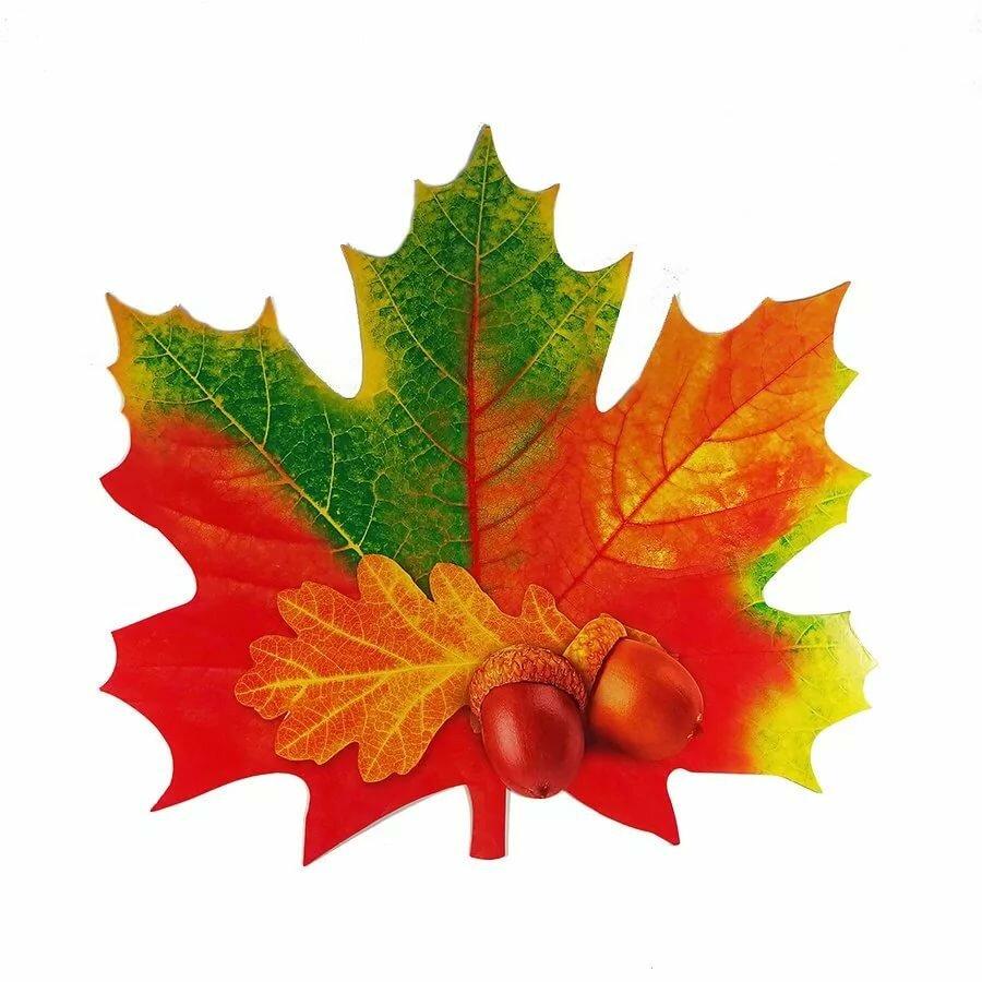 Картинка листьев клена для детей