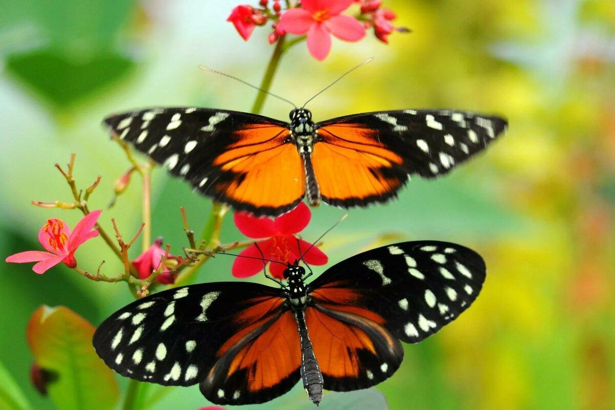 Жизнь бабочки картинка
