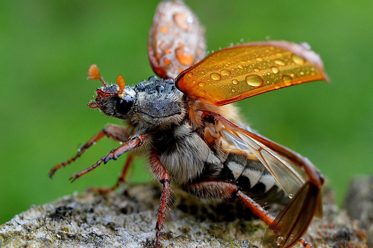 был картинки с красивыми жуками речь другом