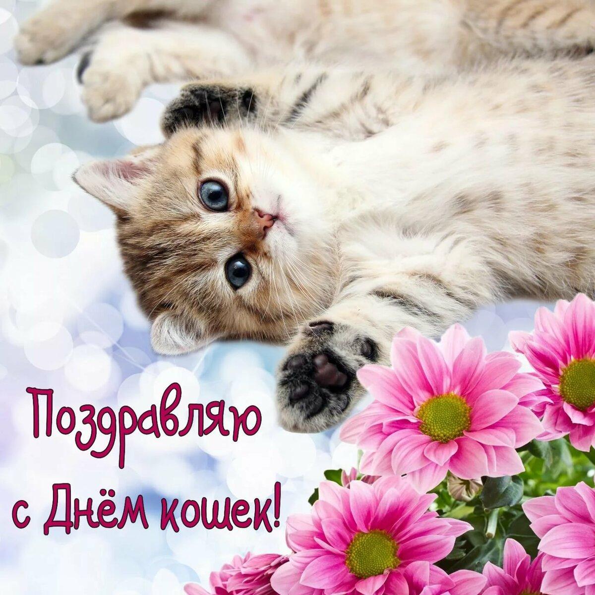 Цветок, всемирный день кошек смешные картинки