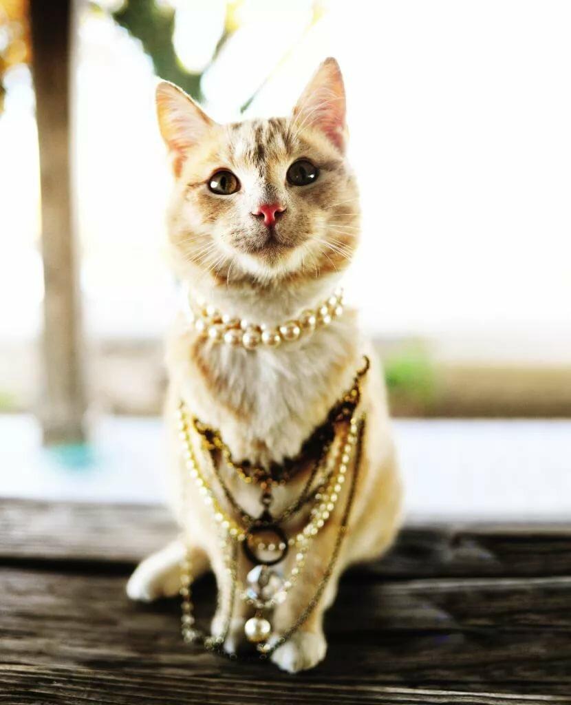 Оригинальные японские клички для кошек