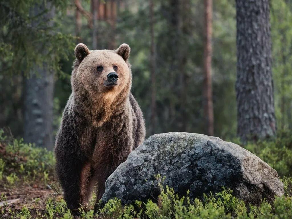 Картинки с животными медведи