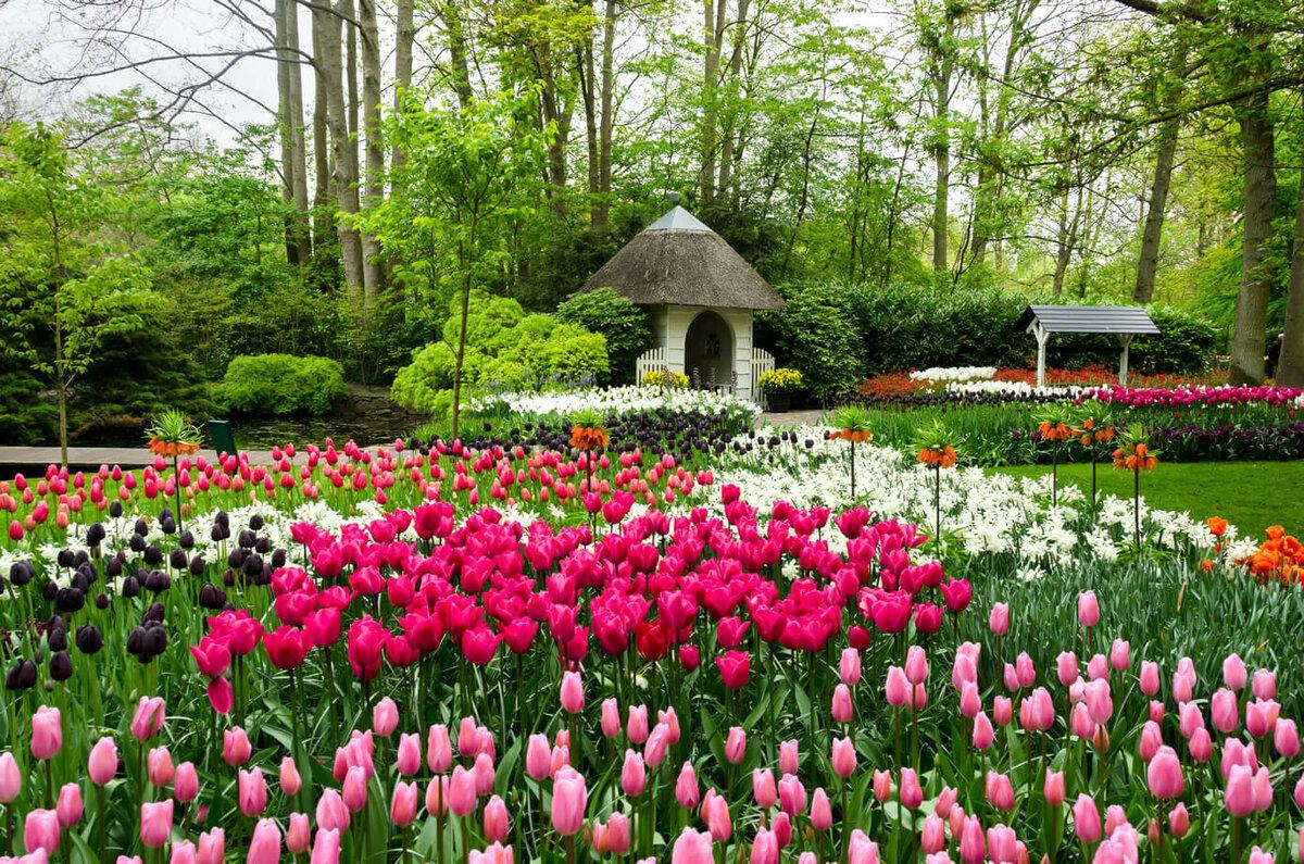 картинки в цветочном парке