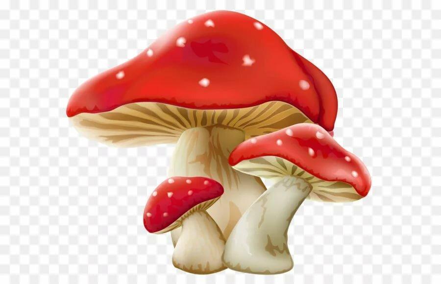 Картинка грибочек для детей на белом фоне