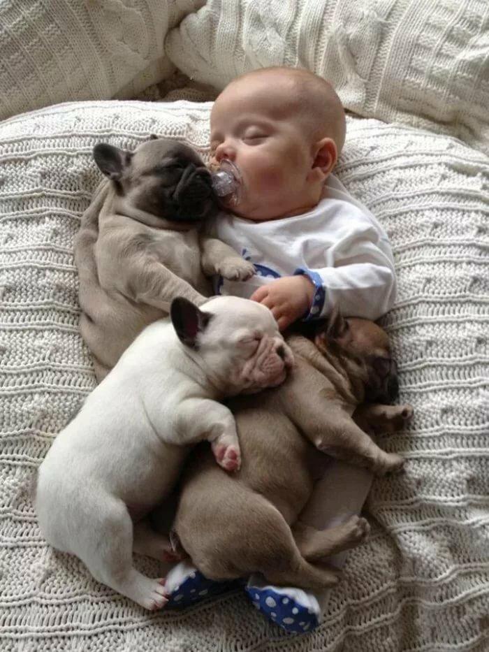 Картинки прикольные с детьми и животными