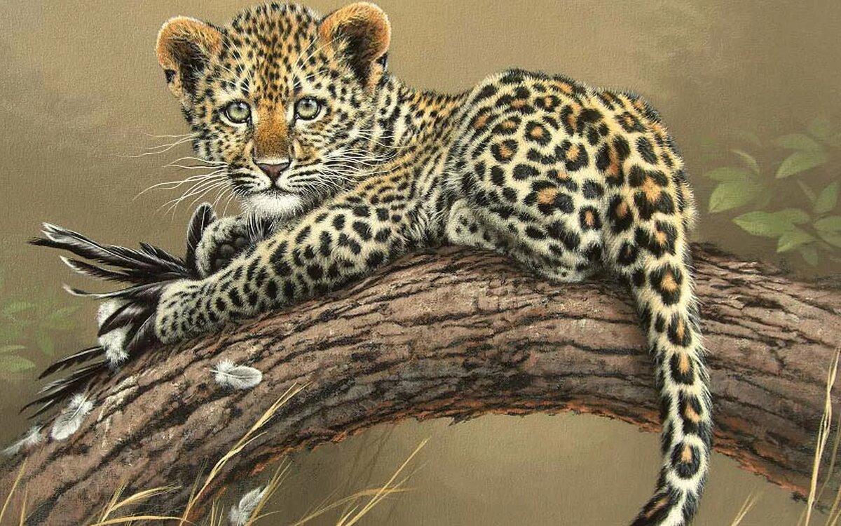 Животные красивые рисунки