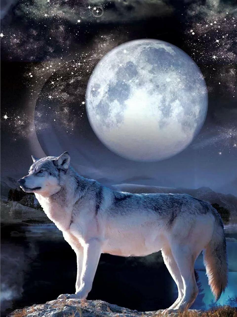 Картинки на телефон волк с луной