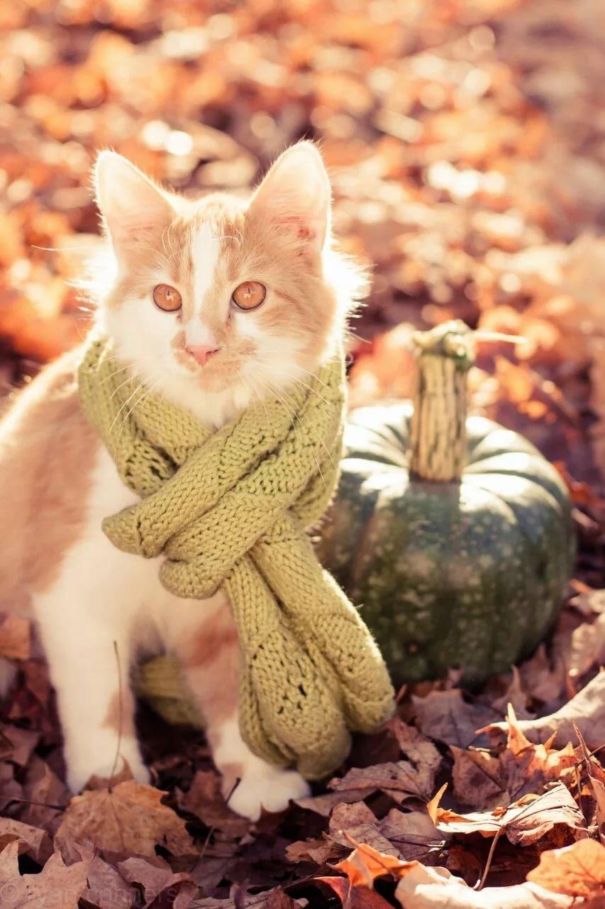 Надписями тебя, картинки рыжий кот в шарфе