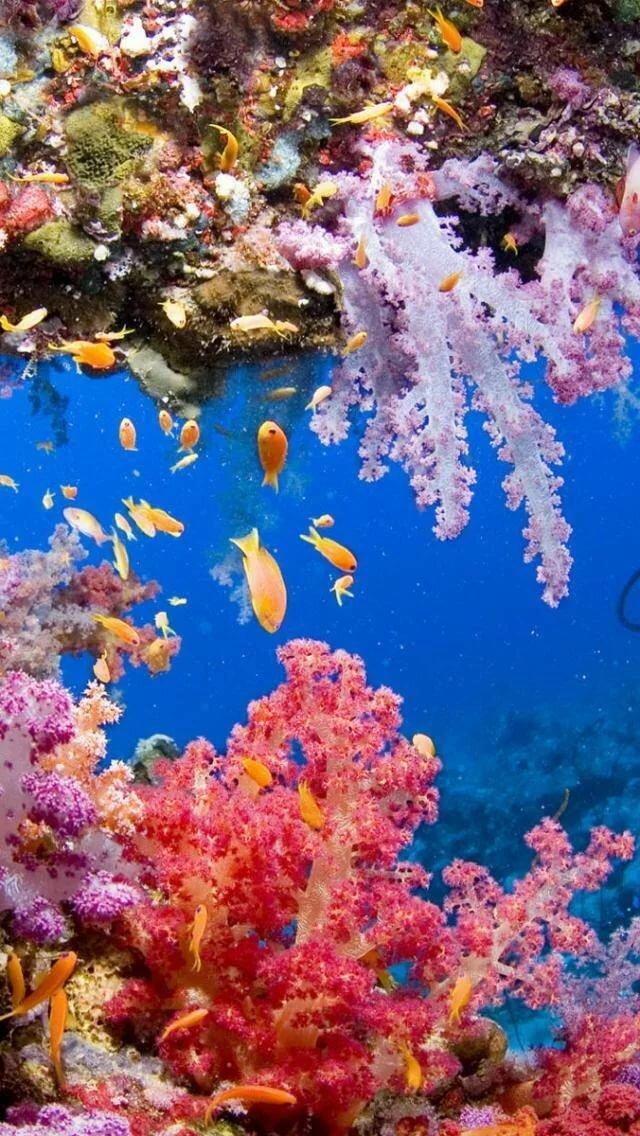 Загадки подводного мира красивые фото