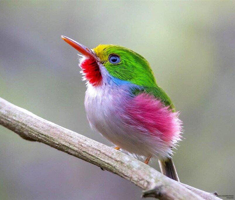 картинки радужных птиц привитой корнесобственной культуре
