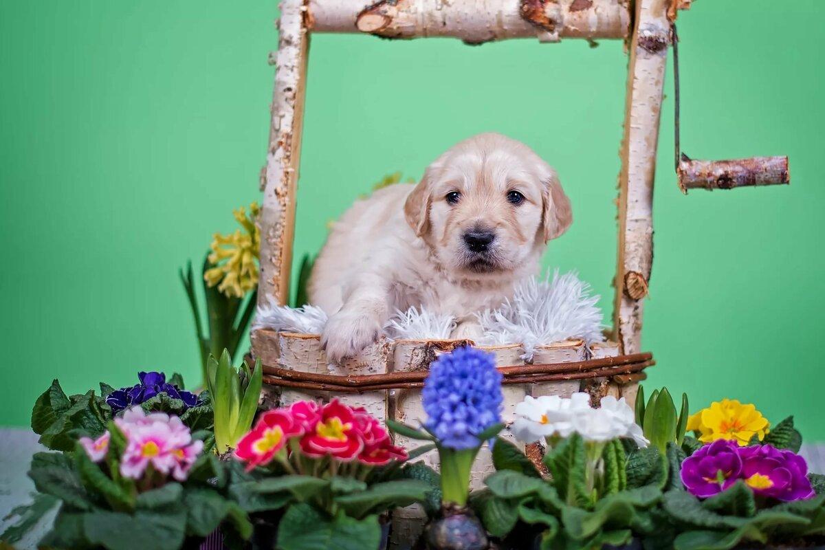 Картинки щенок с цветами