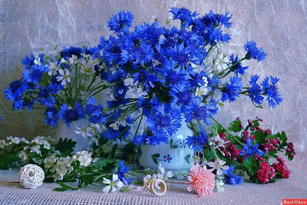 Красивые открытки с васильками с днем рождения, женские