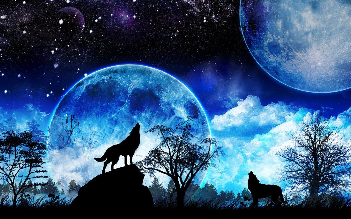 примите картинки волчица под луной использование готового донора