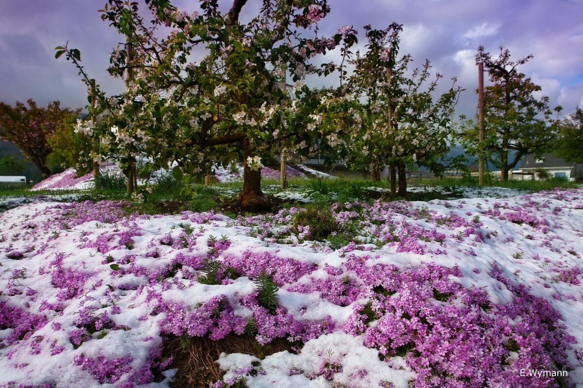 апрель промчался свежим снегом