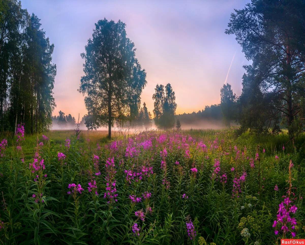 летние пейзажи россии картинки эти фото видео