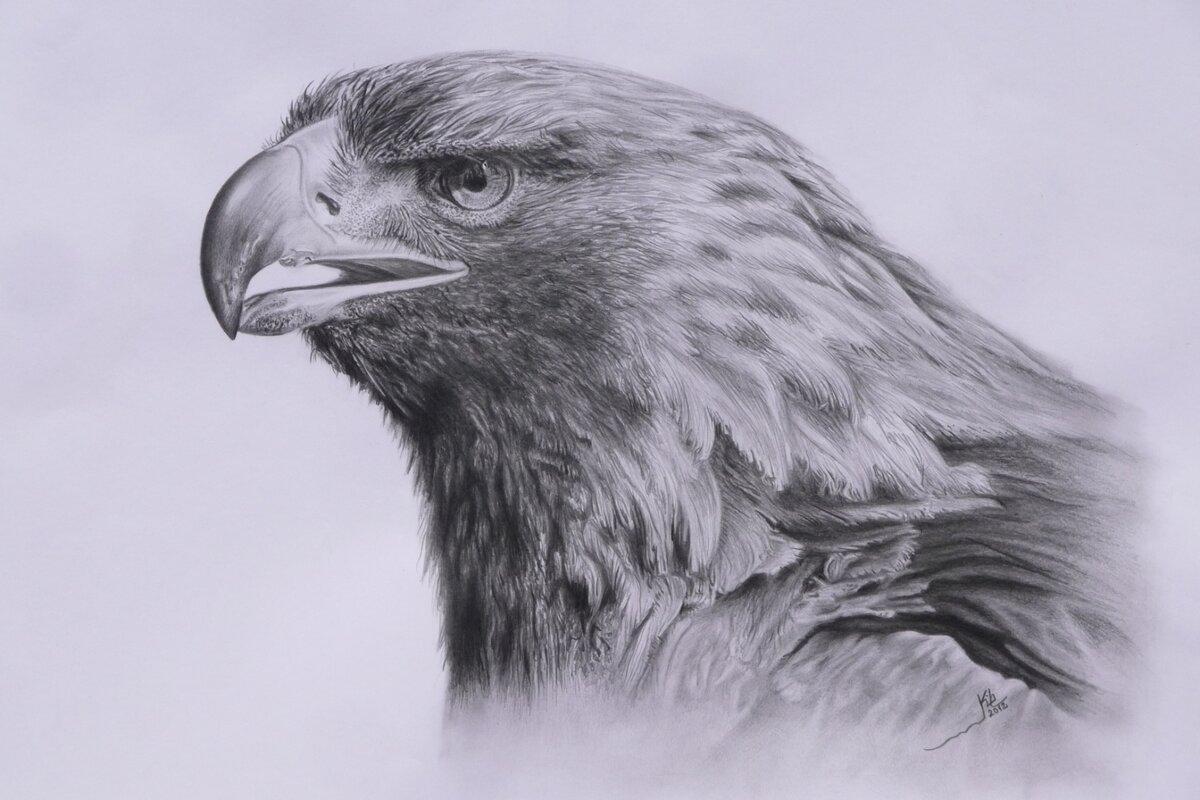 таких картинки хищных птиц карандашом выглядит