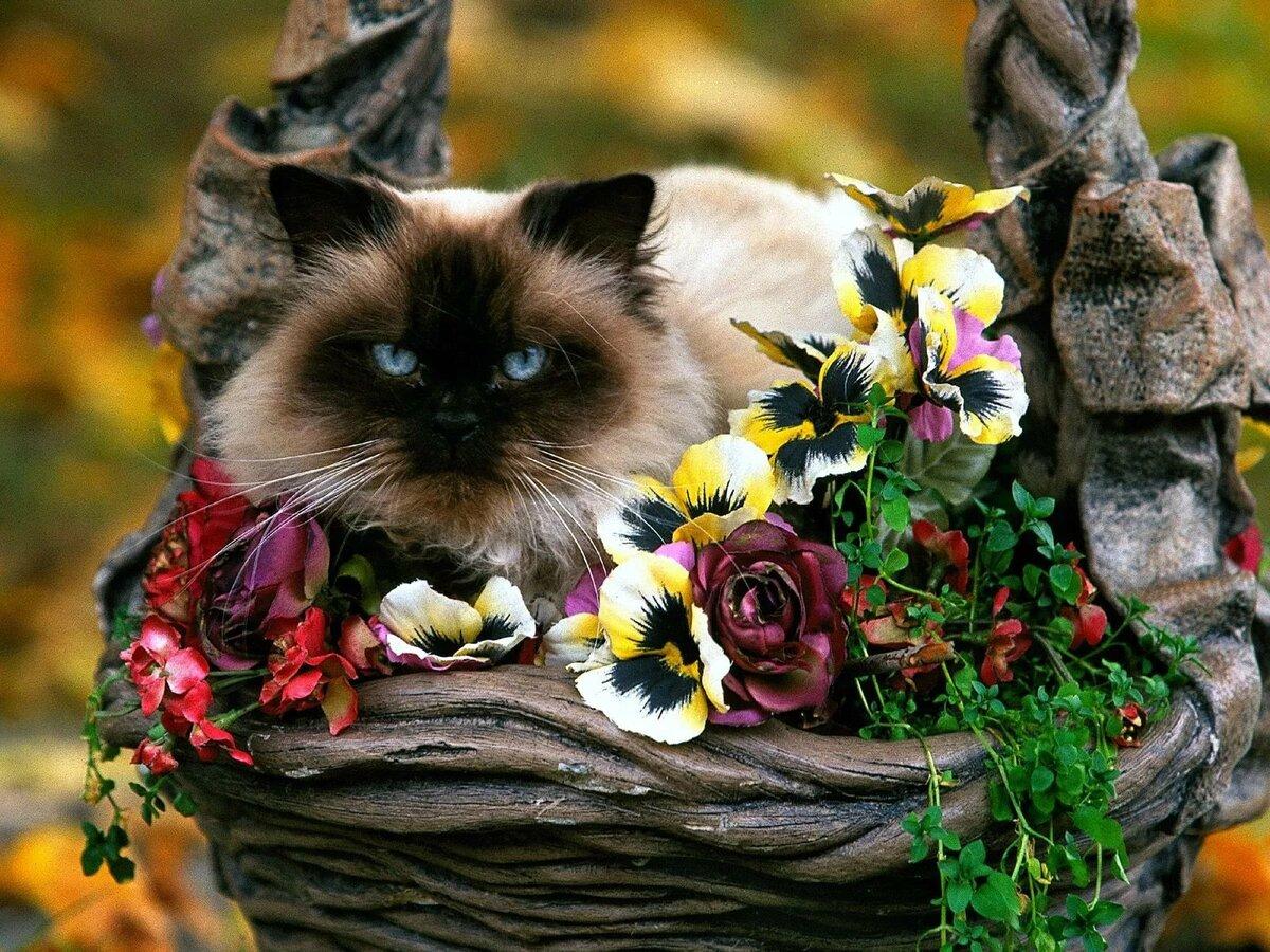 подойти чудесные животные фото нашем питомнике можете