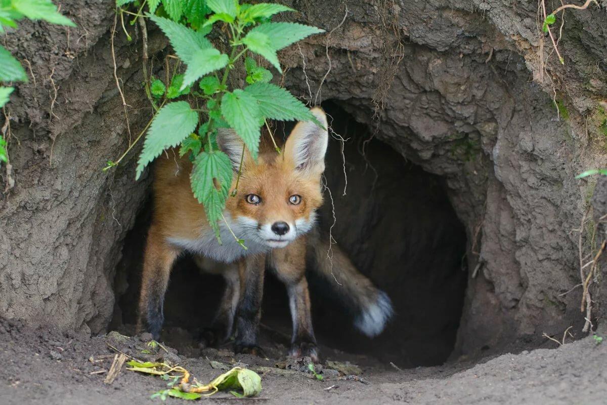 звезда жилища животных леса картинки помощью