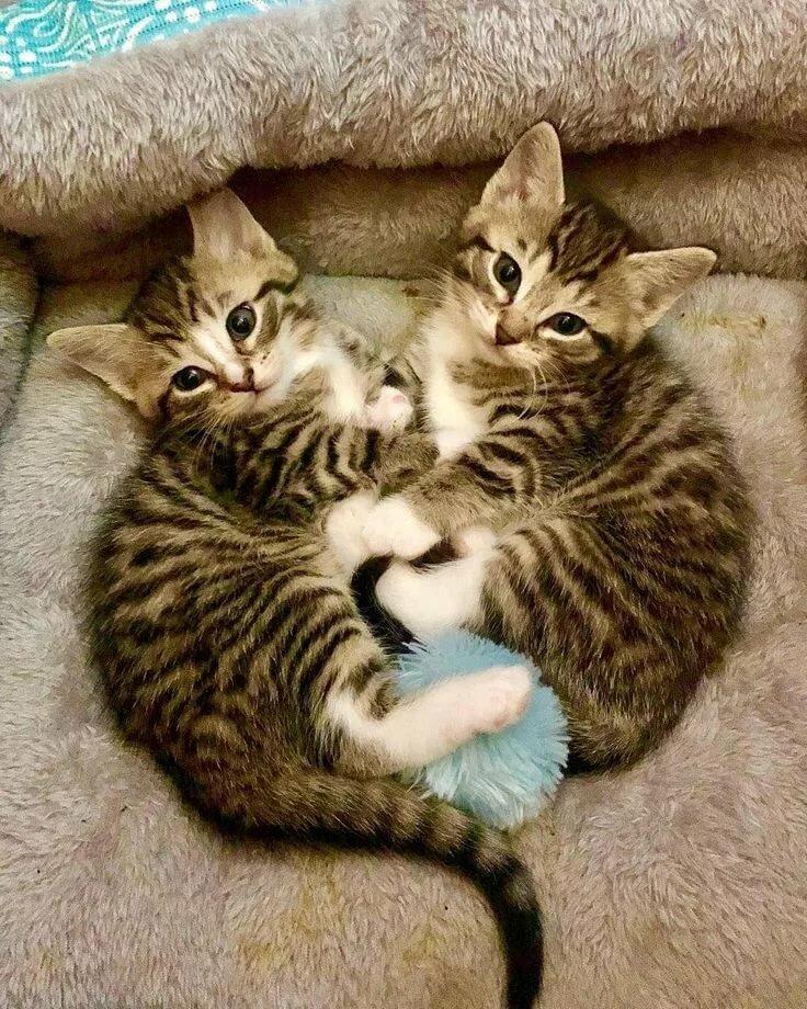 картинки котята или коты волос хной рыжий