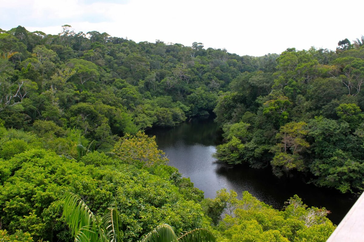 леса амазонки картинка дом выглядит