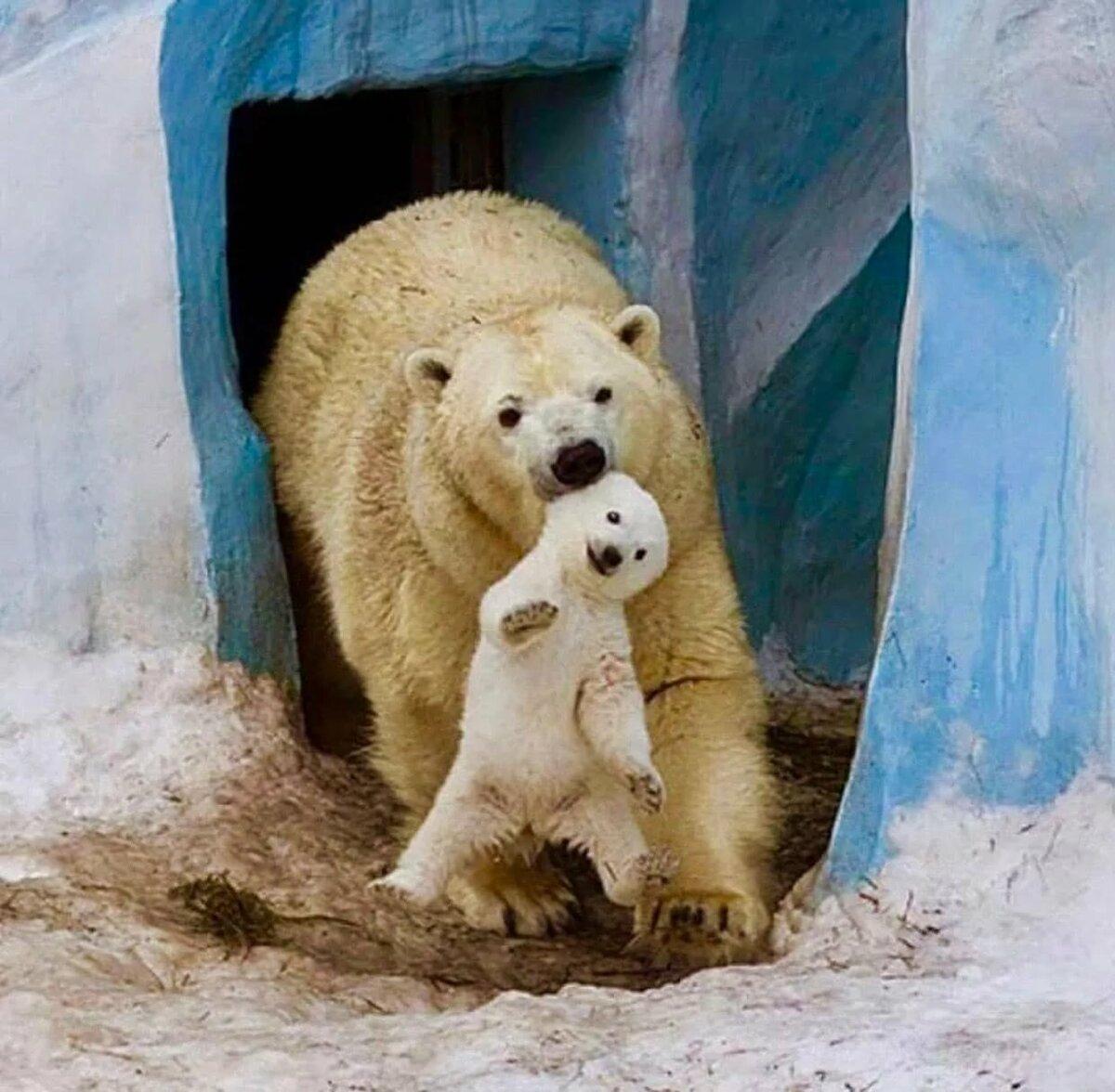 Картинки с белым медведем прикольные, февраля
