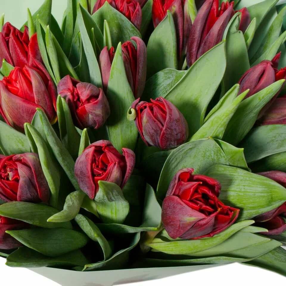 букет тюльпанов картинки фото полностью