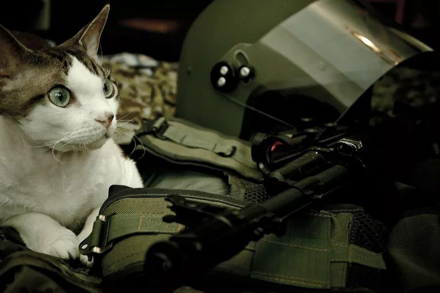 картинки боевых кошек чем отличие клапана