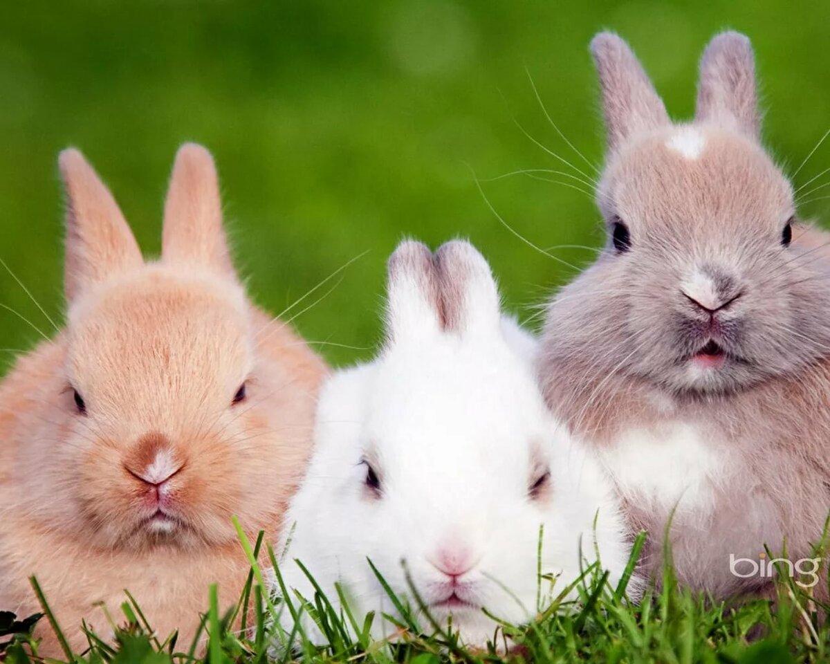 способствует картинки одинаковых кроликов что еще